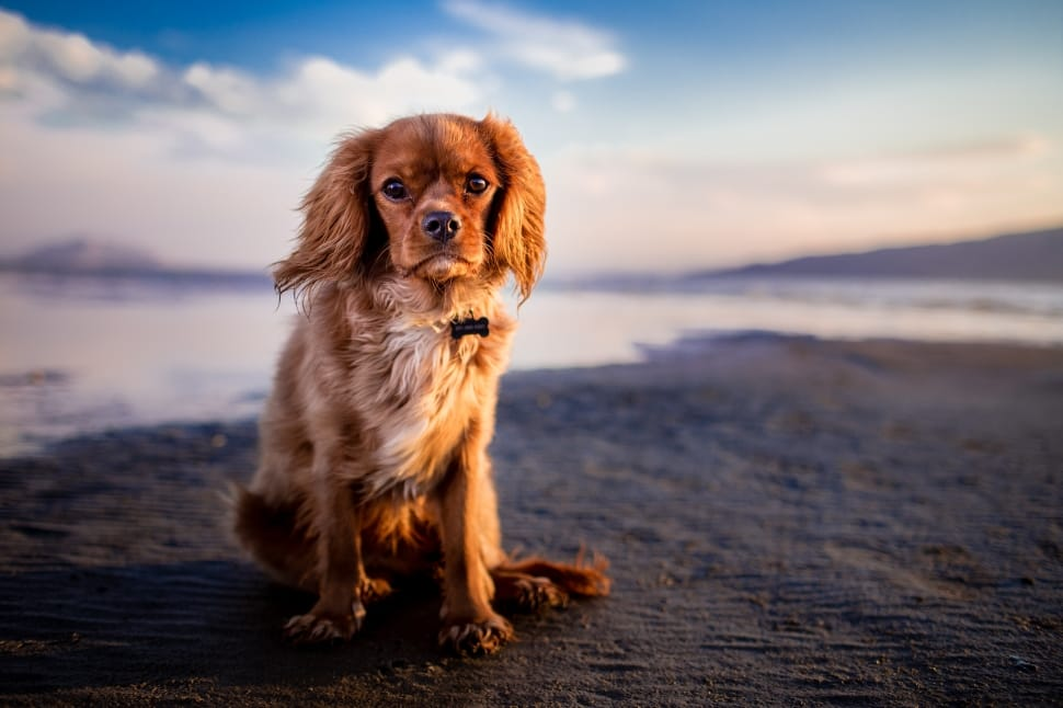 adorable-animal-beach-canine-cute-wallpaper-preview