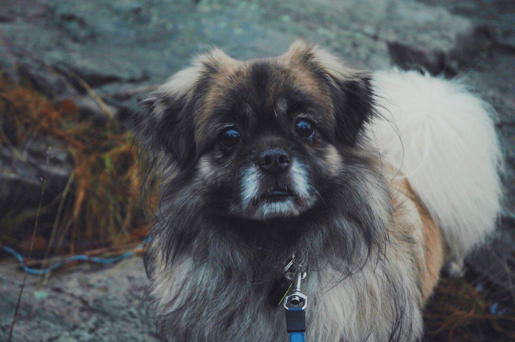 adorable-animal-blur-breed-240943