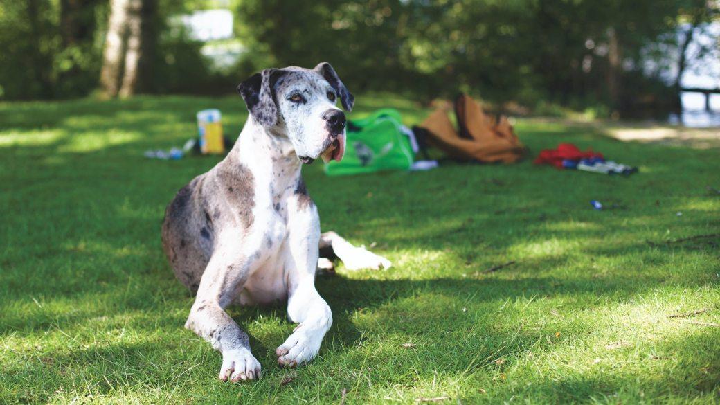 animals-dogs-dutch-green-grass-103540