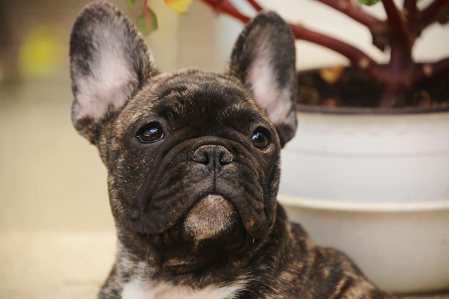 cute-dog-pet-portrait