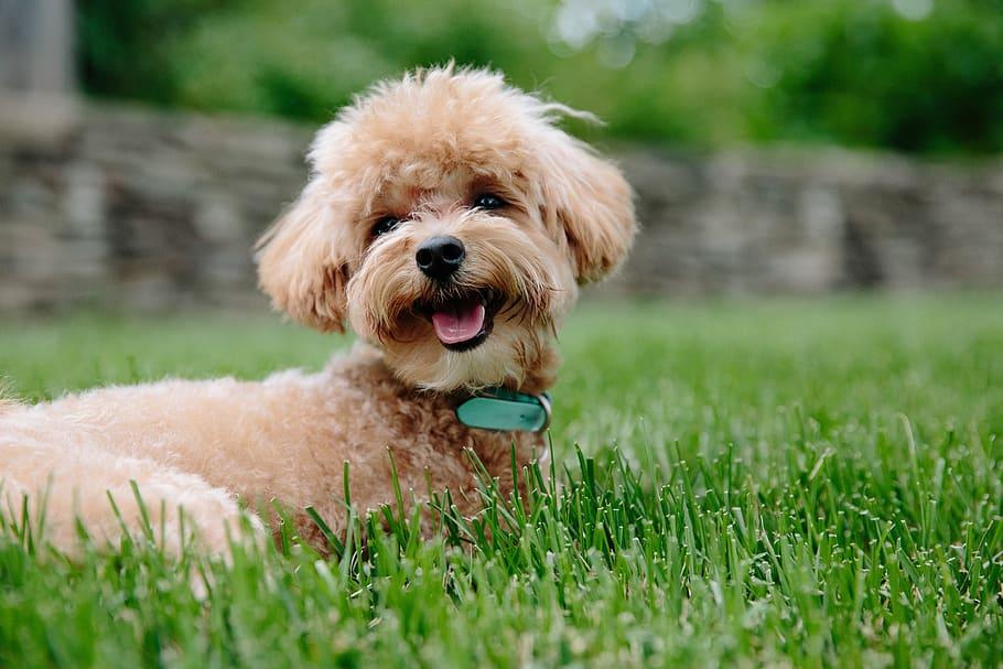 puppy-dog-pet-animal
