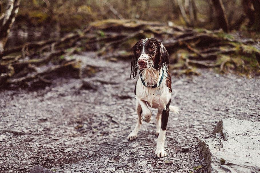wet-dog-animal-friend