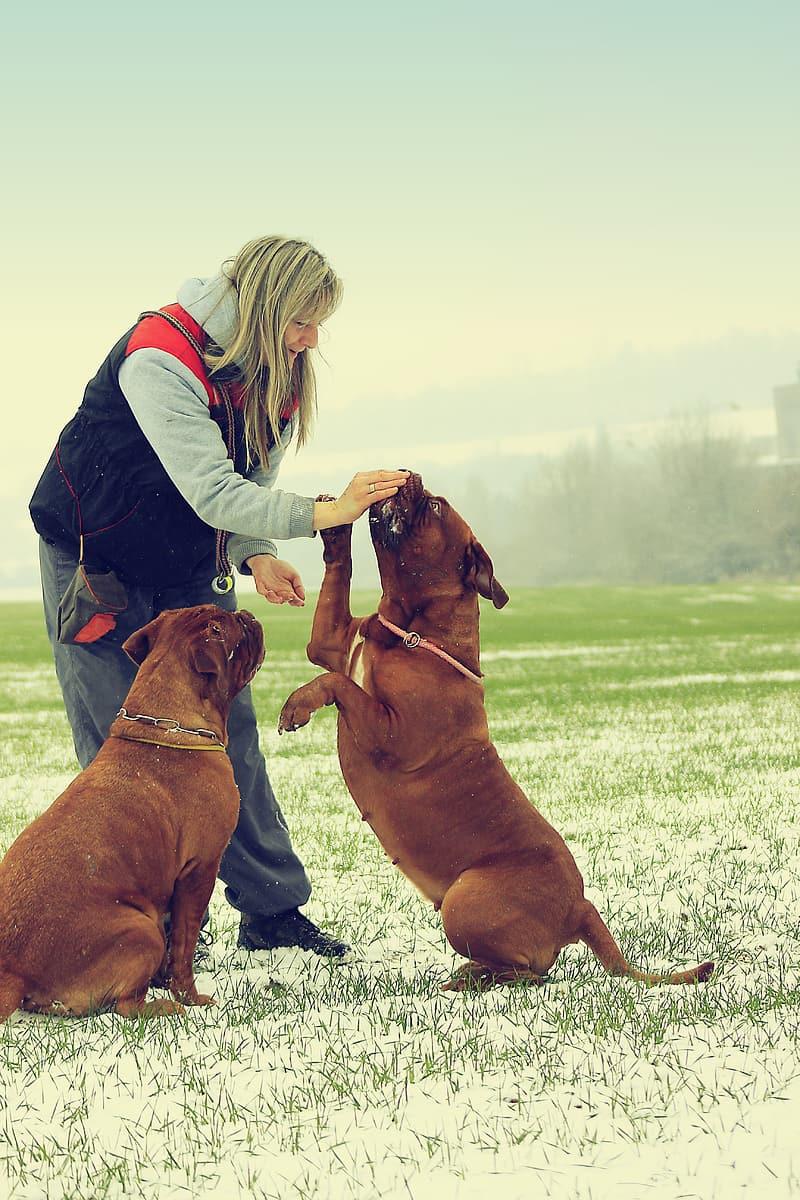 woman-feeding-the-two-tan-dogs