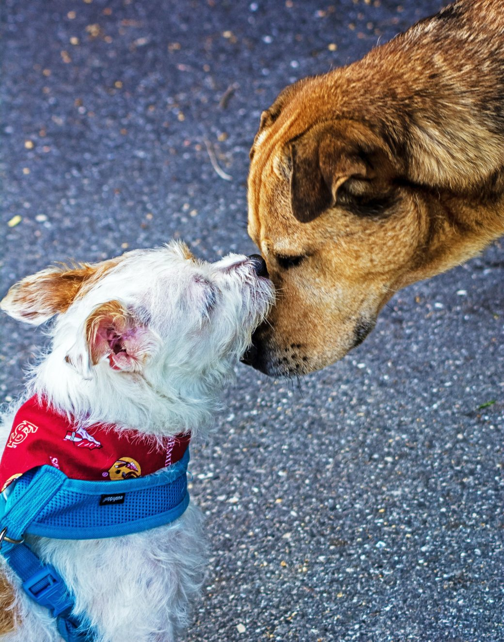 close-up-photography-of-two-dogs-1364729