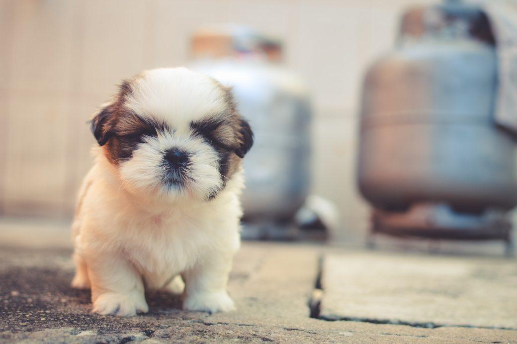 dog-tough-small-puppy-69372