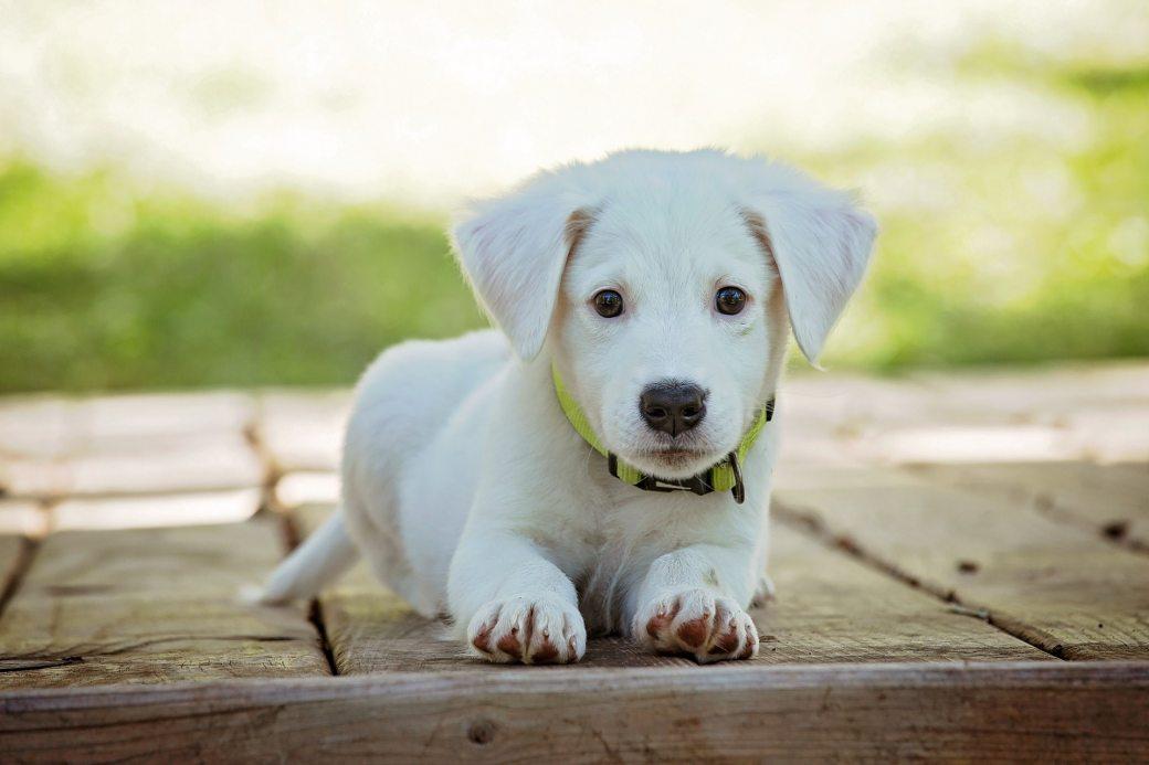 portrait-of-a-dog-257540