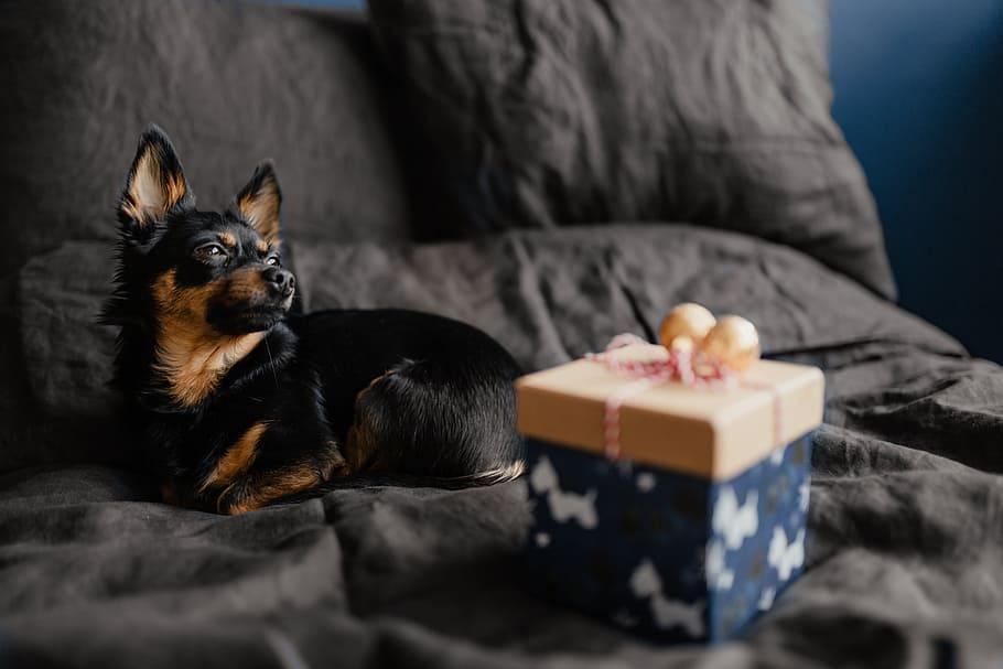 christmas-dog-gifts-pet