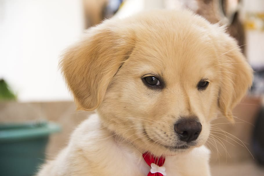 dog-cute-puppy-adorable