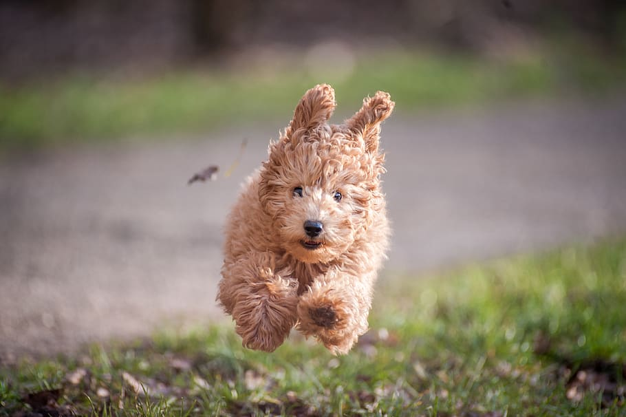 dog-jumping-on-grasses
