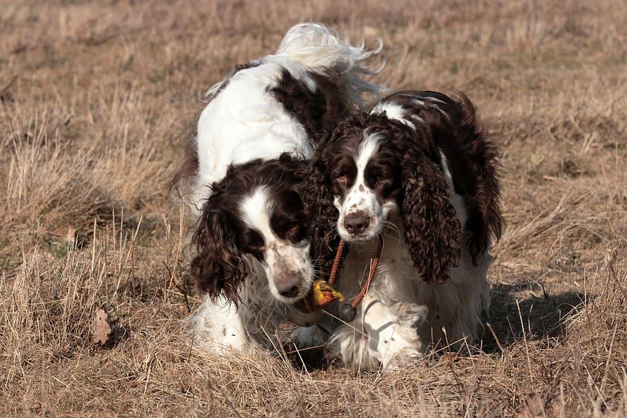 dog-mammal-animal-pet