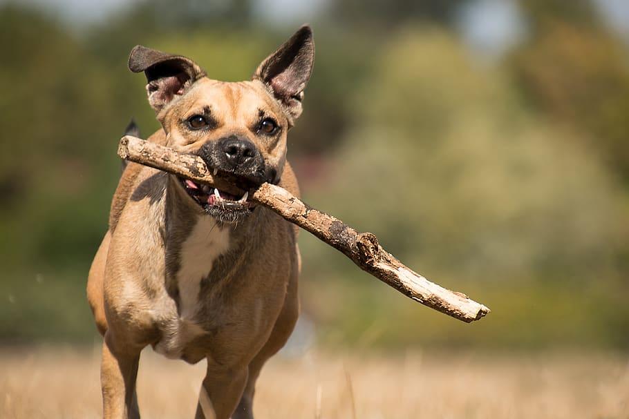 dog-mammal-mongrel-stock-branch