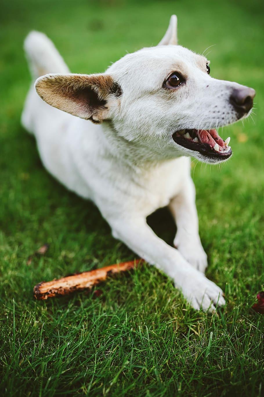 dog-pet-animal-fun