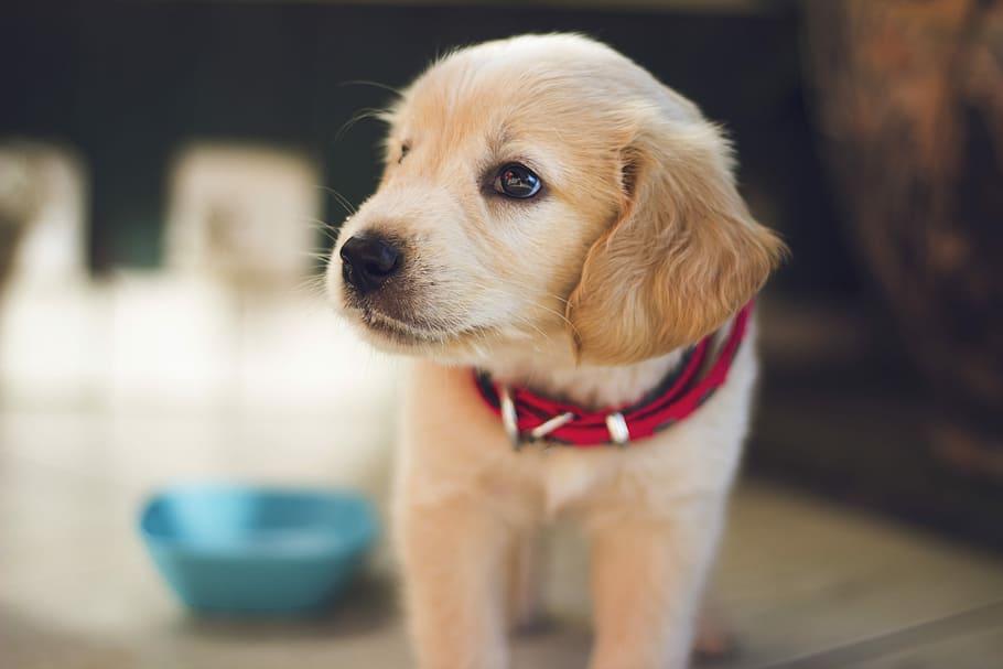 dog-puppy-collar-fur