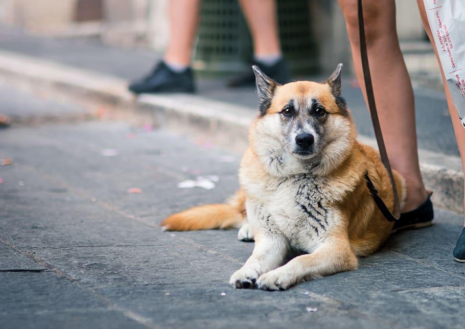 dog-reclining-on-pavement-near-sidewalk