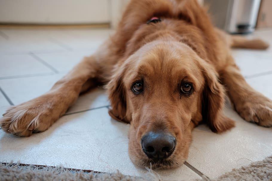eyes-dog-cozy-house