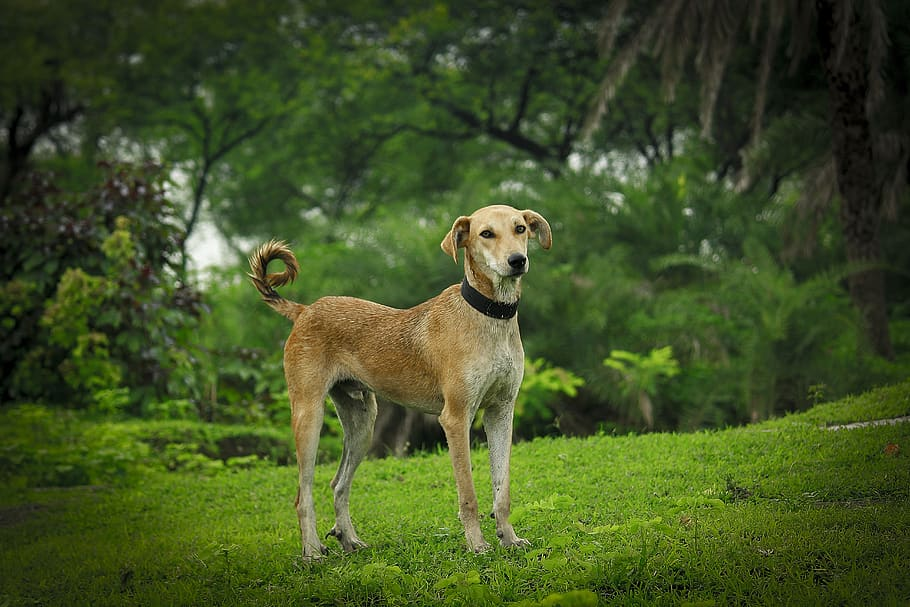 indian-dog-nature-tree