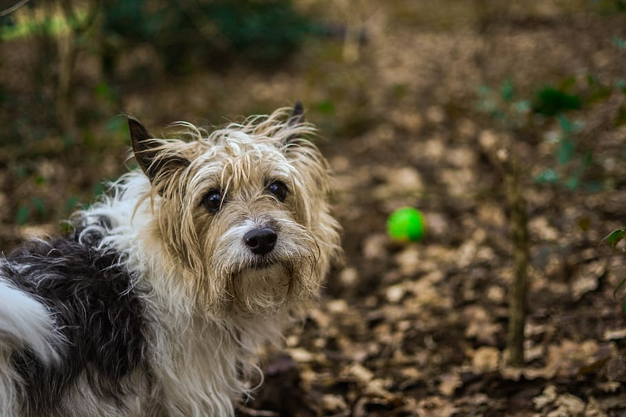 long-coated-white-and-black-dog-standing-near-green-leaf-plants-in-selective-focus-photography