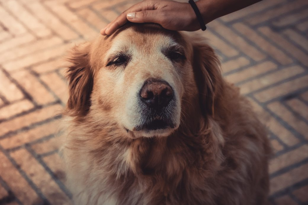 photo-of-person-petting-a-dog-2123773