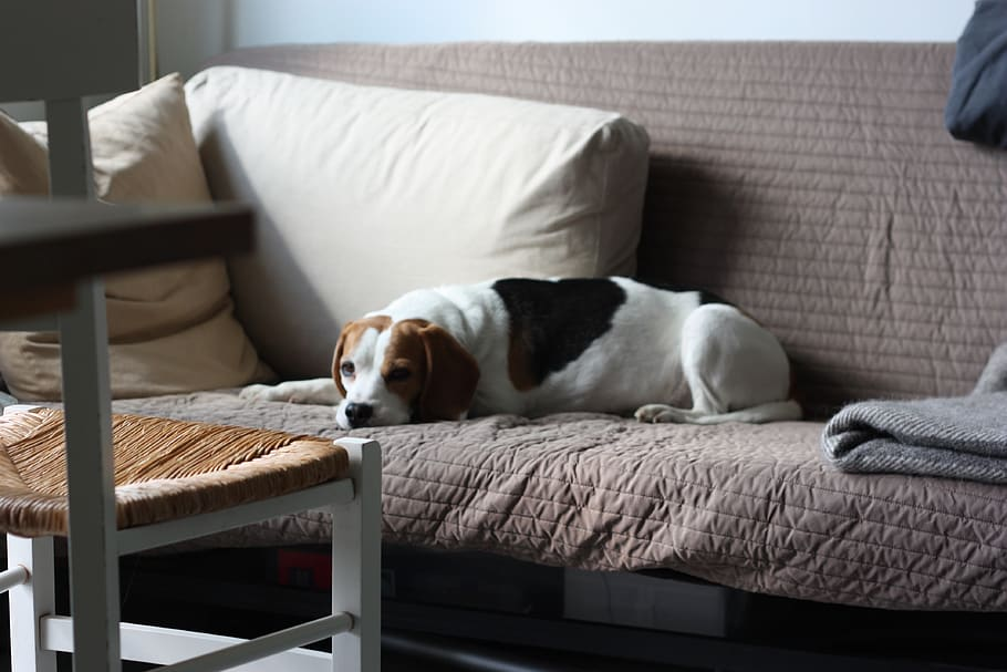 sweden-uppsala-beagle-family