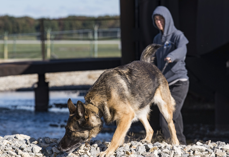 436th SFS Partners with Worchester K-9 unit