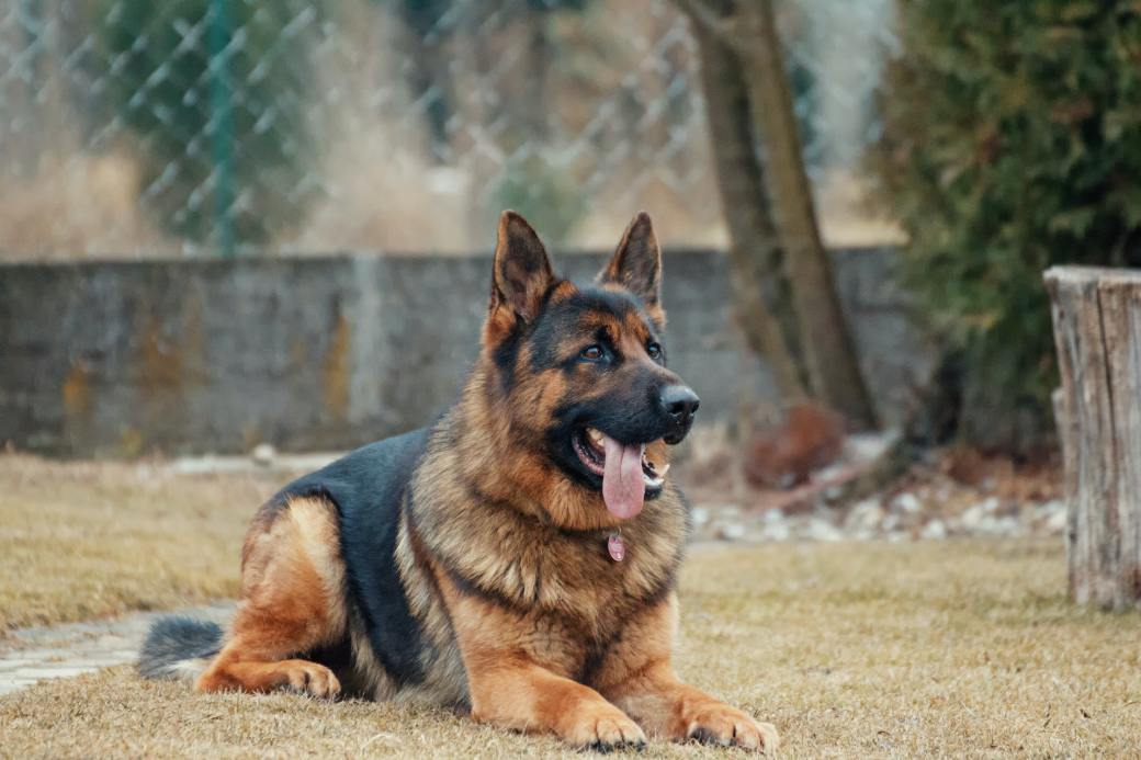 animal-animal-photography-blur-breed-333083