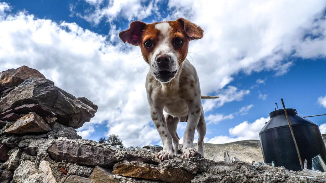 animal-canine-cloudy-container-218825
