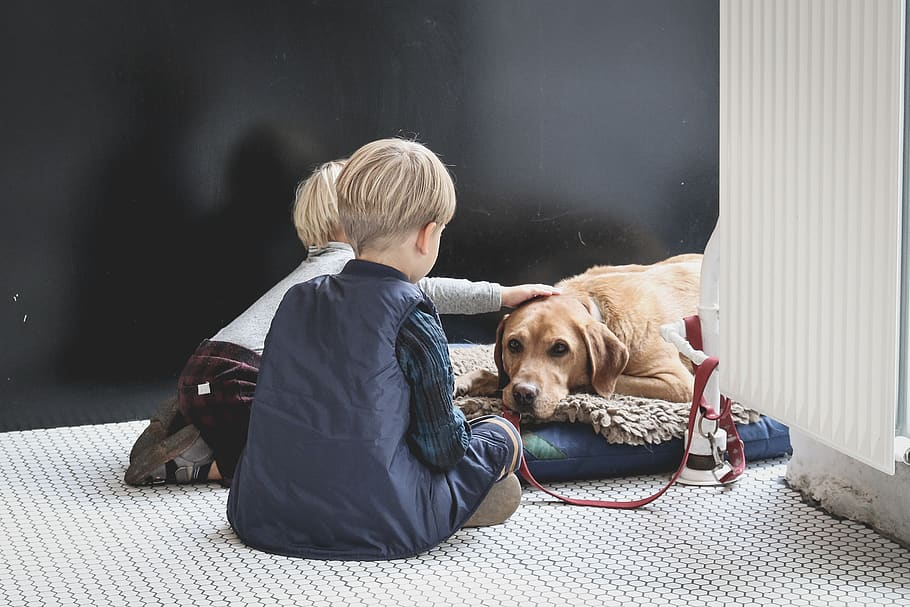 boy-sitting-in-front-of-dog