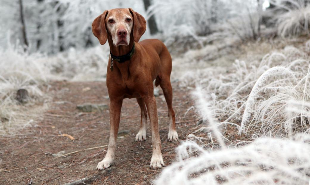 depth-of-field-photography-of-brown-dog-near-white-grasses-631297