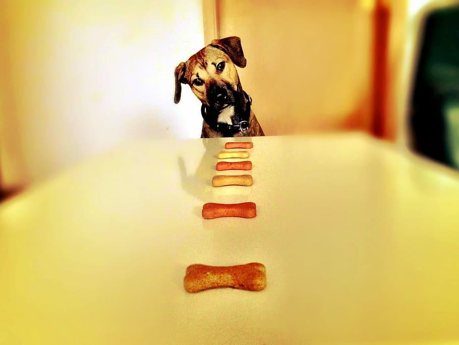 dog-bone-hunger-eat