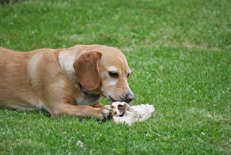 dog-bone-summer-animal