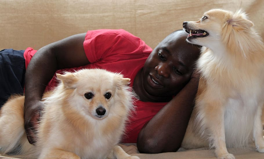 dog-man-maltese-pomeranian-donation-stroke