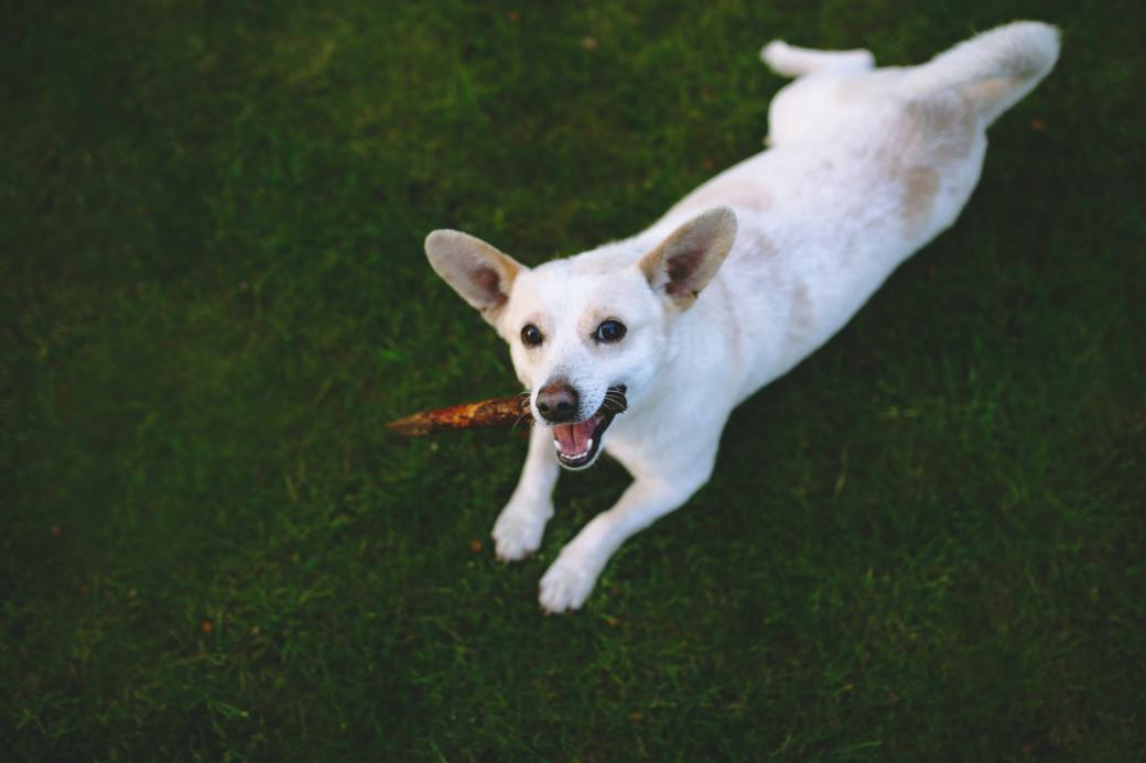 dog-on-the-grass-5830