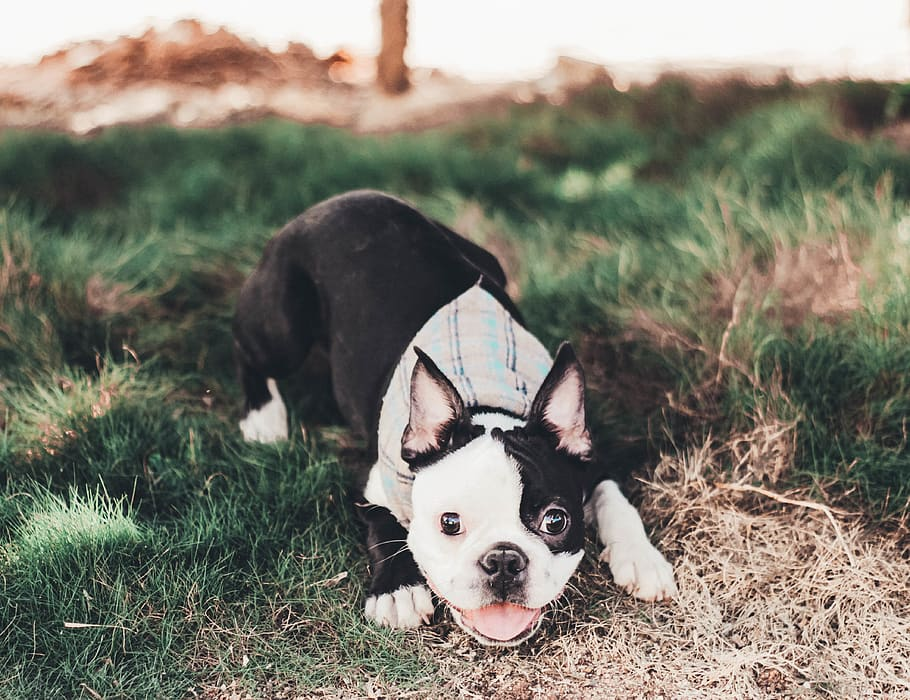 dog-pet-canine-animal
