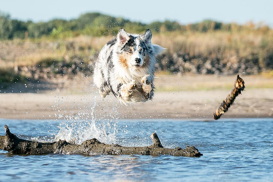 dog-water-nature-play