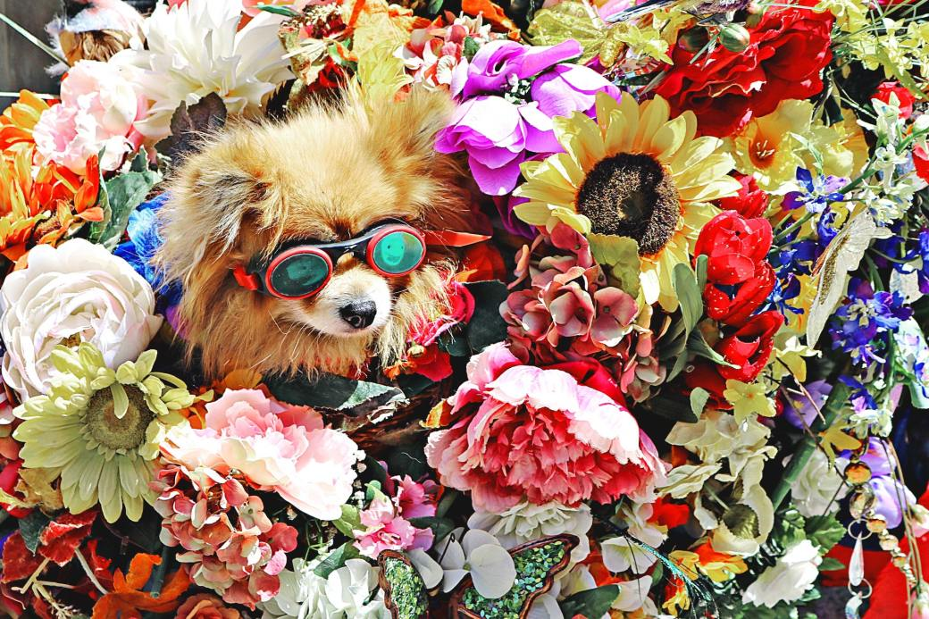 dog-wearing-glasses-surrounded-by-flowers-1577881
