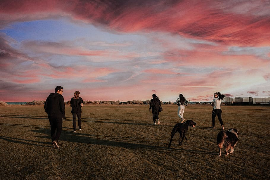 four-women-and-one-man-running-together-with-two-dogs-on-grass-field