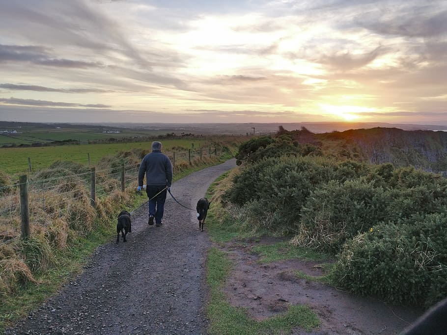 ireland-dogs-walking-man