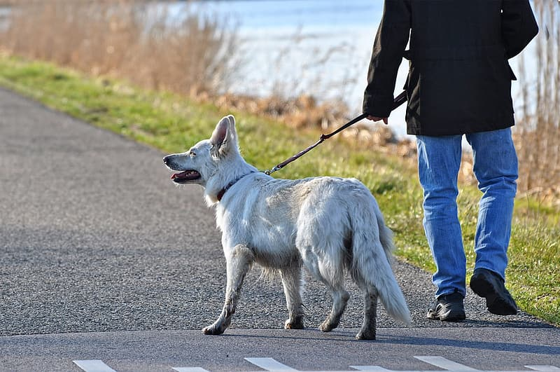 person-walking-with-medium-coated-white-dog-on-concrete-road-during-daytime