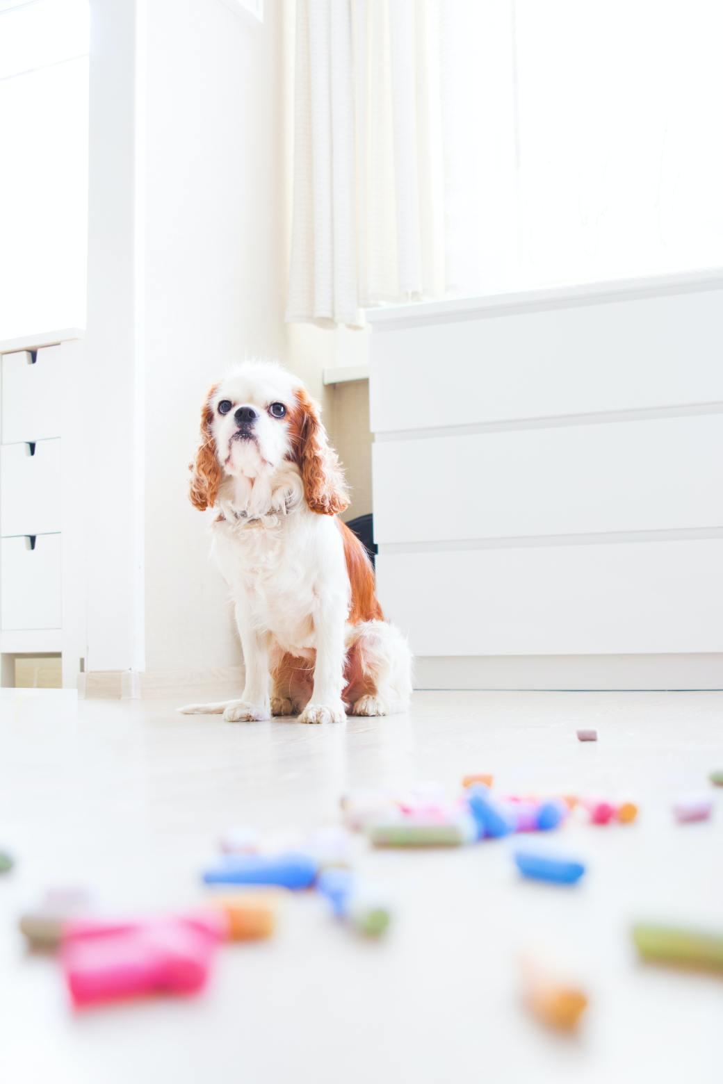 pet-dog-sitting-down-on-floor-1975521