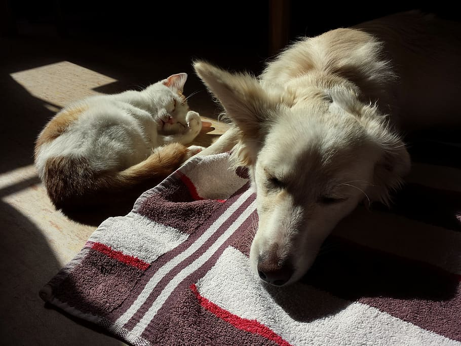 pets-cat-dog-cute-together-kitten