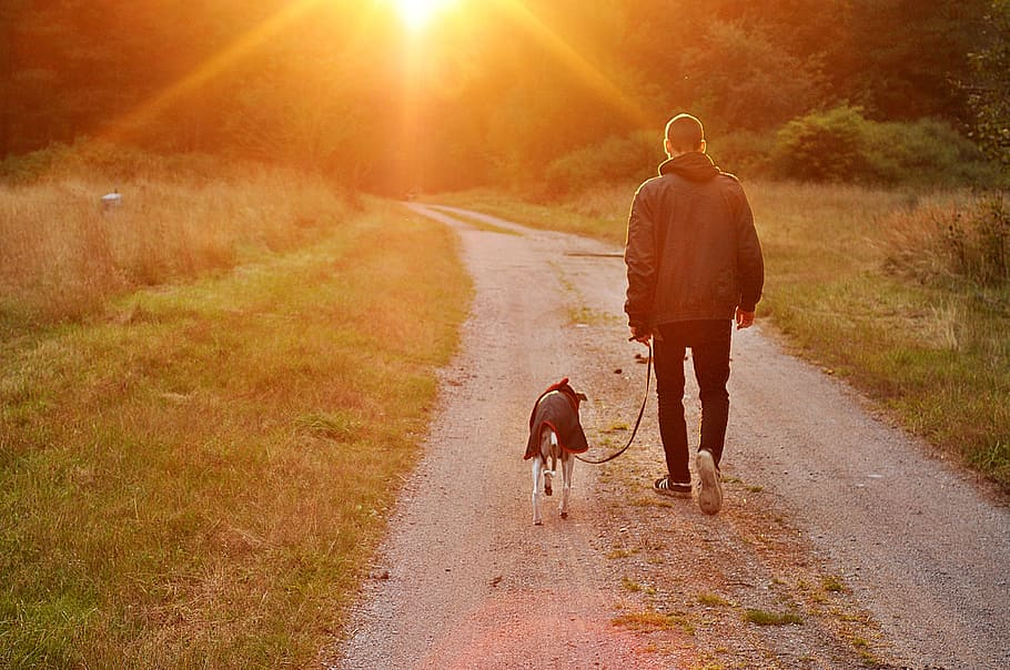 sunset-dog-owner-man