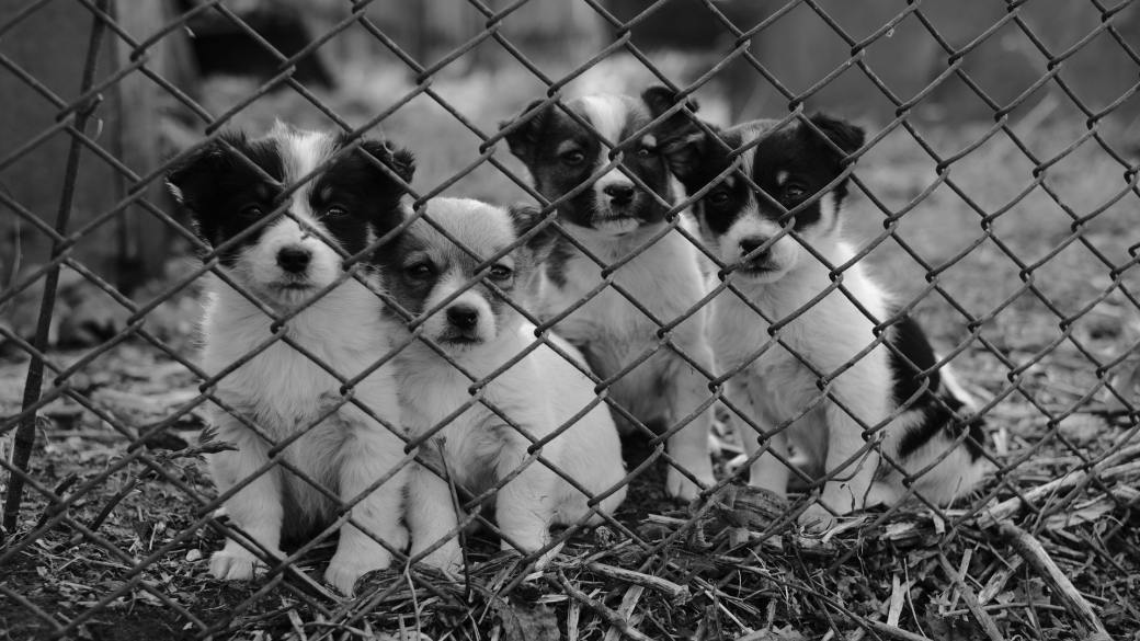 white-and-black-short-coat-small-dog-on-grey-metal-fence-3988821