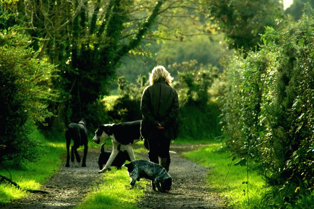woman-in-black-jacket-and-4-dogs-walking-on-dirt-path-62379