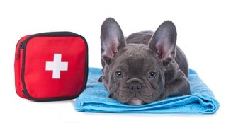 Have medical supplies for your dog while camping.