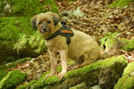 Have a collar or harness with your dog's name so if they get loose while camping, they can be identified.